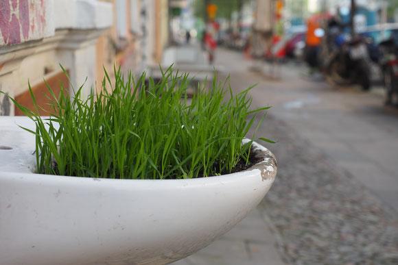 kleine Stadtwildnis Berlin, Grass im Waschbecken