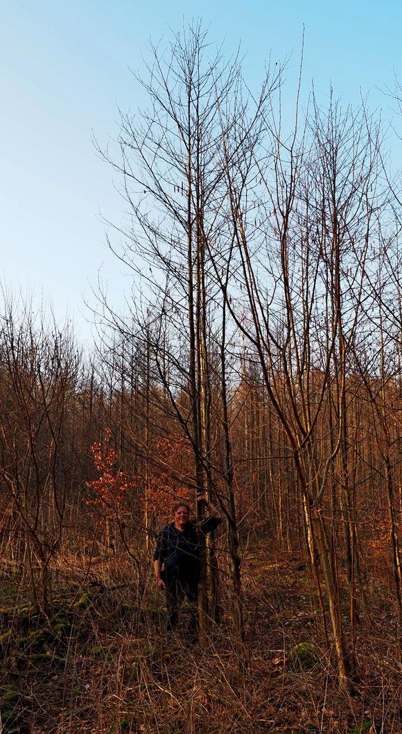 Sie wachsen bis in den Himmel meine Bäume von November 2013. 7 Jahre und 4 Monate  später 25.3.2021