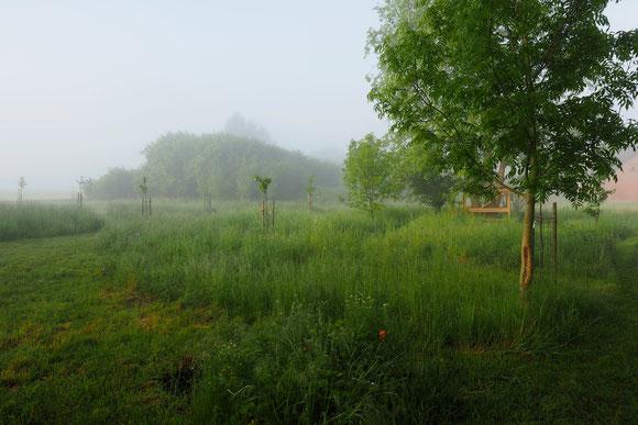 Ein Morgenhauch im Sommer liegt über dem Garten Juni 2020