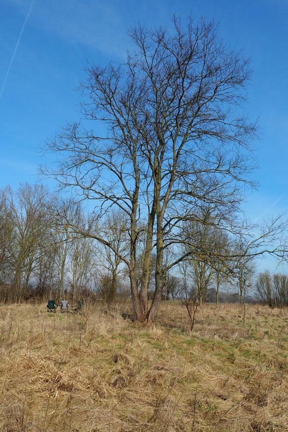 blühenden Wildblumen und Obstbäume in Vorpommern der Traum kommt, endlich Apfelbäume pflanzen!