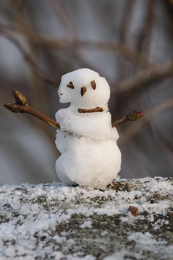 Zeit ist immer da, man muß sie nur nutzen.  Oder in jeder Knospe ein neuer Schneemann?