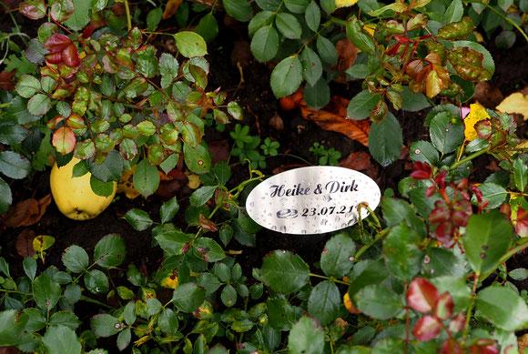 unsere Patenrose in Starkow mit unserem Schild