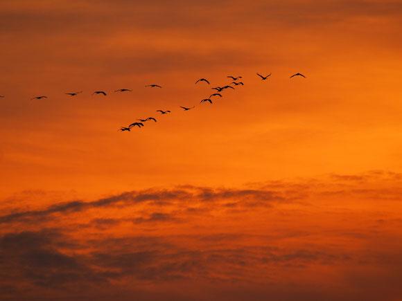 fliegen im Farbenmeer, Kraniche was sonst