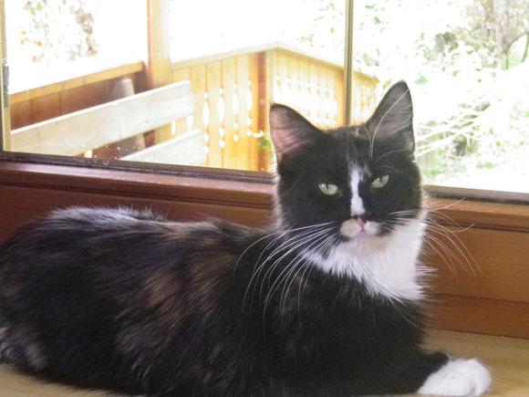Meine Maine Coon Katze Pia