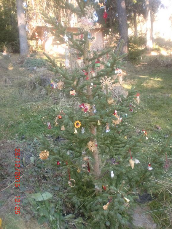 Das Gartenjahr geht dem Ende zu .Es gibt sogar ein Weihnachtsbäumchen