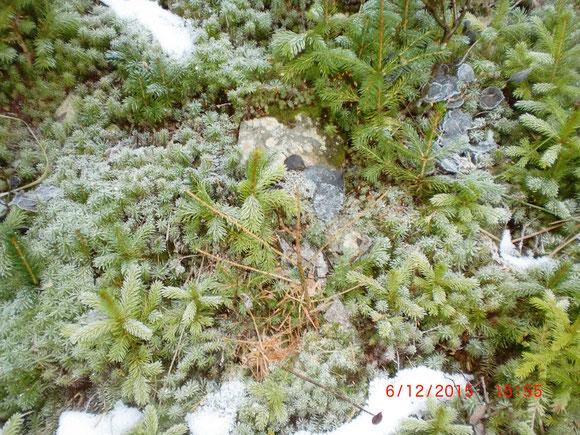 Ein bisserl ist vom ersten Schnee ja geblieben