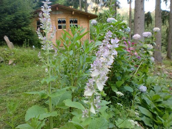 Vor meinem Waldhaus gibt es jetzt auch ein Blumenmeer