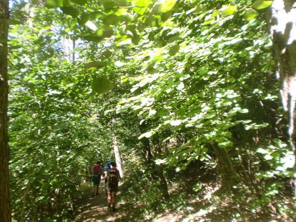 Das war ein schöner Waldwanderweg dem Hang entlang .Wir steuern St. Siegmund an