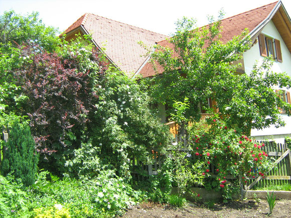 Unser Zuhause inmitten einer grünen Almwelt
