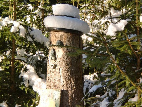 Schon Ende November ist heuer alles tief verschneit. Eiszapfen hängen vom Dach meiner hütte und es hat Temp. bis 8°minus.Frühe Winterruhe,für die Rehe ist noch einiges von meinen Kräutern geblieben. Ich hhab schon wieder viele Ideen fürs nächste Frühjahr