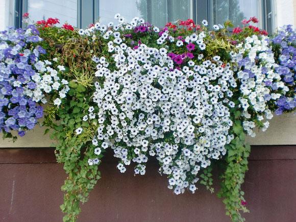 Blumenschmuck auf dem Weg nach Maria Lankowitz