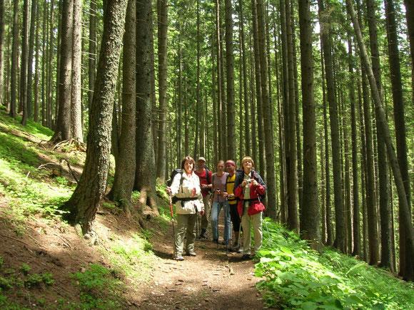 Auf dem Weg durchs Bärental 2009
