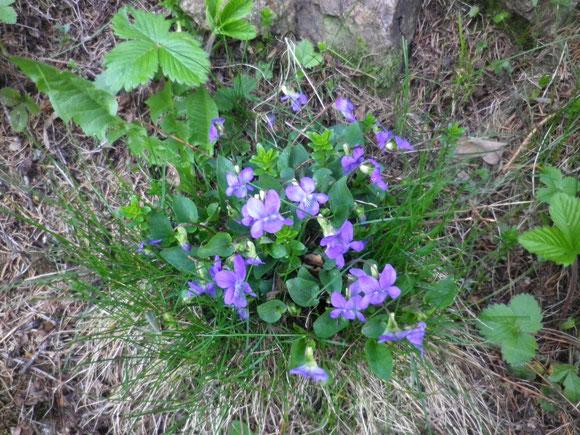Bunte Tupfer, Frühlingszeichen.Farben ,Formen ohnegleichen.Blumen ,Blüten, Gartenfreut.Herz und Sinne ,Frühlingszeit