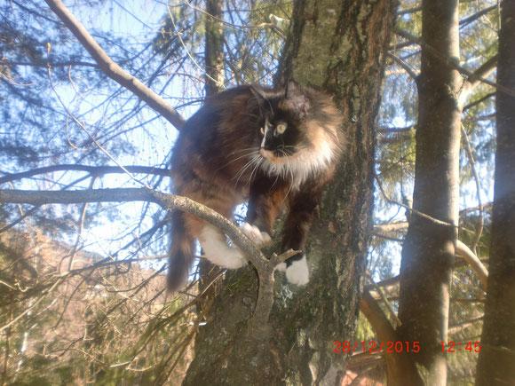 Lustig ist es für Pia auf Bäume zu klettern