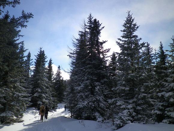 Winterwandern auf der Stubalm
