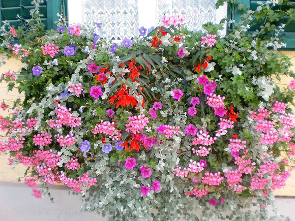 Wir haben uns keine Einkehr gegönnt,aber wir erfreuen uns auch in diesem Ort über den Anblick der herrlichen Balkonblumen