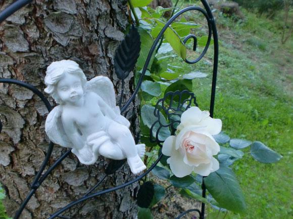 Es ist nach Mitte August und es blühen noch immer Rosen