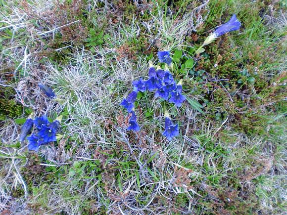 kaum noch Zeit auf die herrliche Alpenflora zu achten