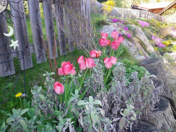 Steingarten im April