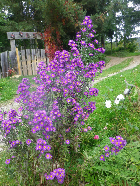 Wundervolle Blütenbracht im Oktober