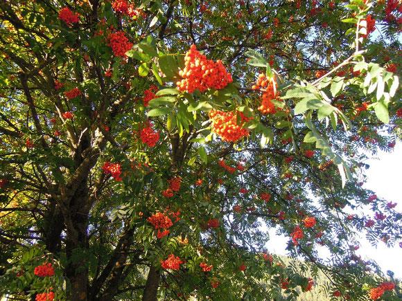 Der Herbst hat seine schönsten Farben für uns vorbereitet