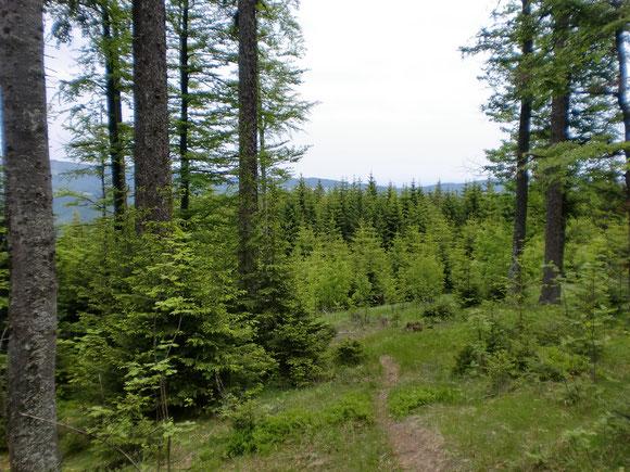 Der weg in Richtung Hühnerkogel und zur slovenischen Grenze zieht sich. Er geht zwar ziemlich steil aber immer durch kühle und romantische Wälder.