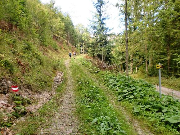 Endlich verlassen wir die Asphaltstraße und der Jakobsweg führt uns über einen bewachsenen Forstweg in Richtung St. Pankratzen