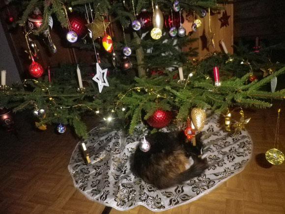 Der Weihnachtsbaum ist wieder da und Pia ist die erste auf der Bildfläche