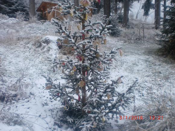 Endlich gibts ein wenig Winterweiss und Kälte nach diesen schönen frühlingshaften Winterbeginn