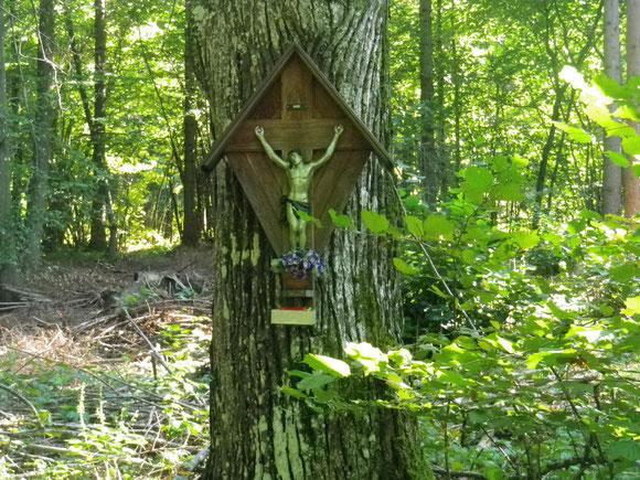 Gut tut das Wandern durch diesen Schattigen Wald