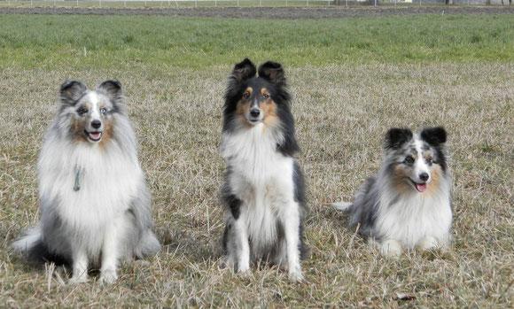 Finn, Mandy und BlueBoy
