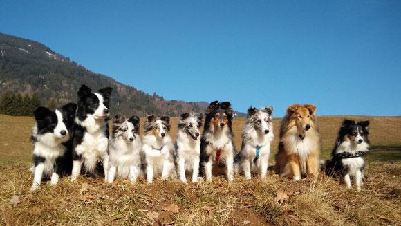 Finja, Kim, Belle-Tochter Coco alias Illy, Belle, Belle-Tochter Ixy, Mandy, Coco-Tochter Minx, Kiddy, Belle-Tochter Lilo