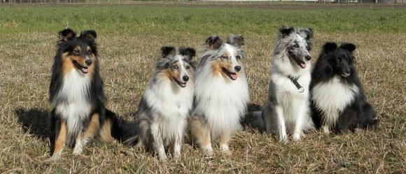 Iago, Belle, Enzo, Ixy und Cheeky