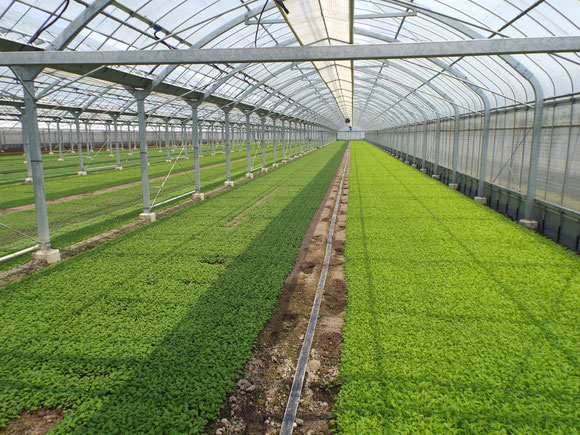 ハウスで土耕有機栽培