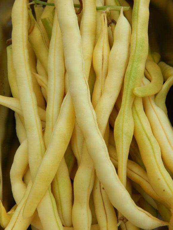 Zum ersten Mal angepflanzt: Gelbe Bohnen
