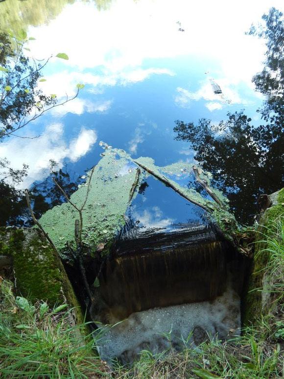 Naturnahes Leben, nachhaltig, Familienleben auf dem Land, Sunde, Wald, Waldsee