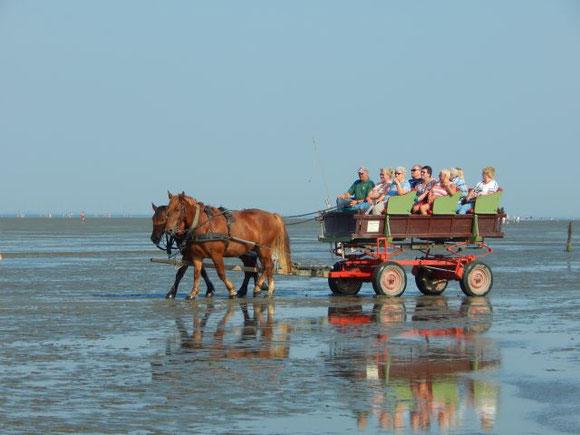 Pferdewagen Neuwerk Cuxhaven Wattfahrten