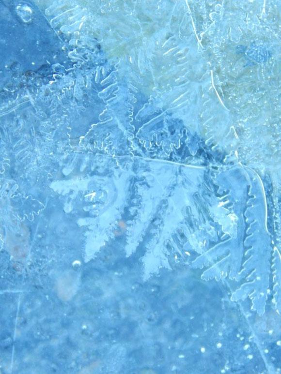 Auch wenn das Wetter im Moment in die komplett andere Richtung geht... (es sind für Sonntag 14°C angesagt!) - hier noch ein hübsches Blättermuster im Eis von vor ca. 2 Wochen, Mitte November... es passt so gut zur Farbe des Regenmantels