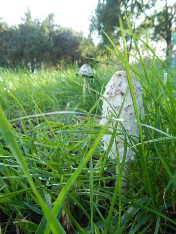 Naturnahes Leben, nachhaltig, Familienleben auf dem Land, Schopftintling, Herbst