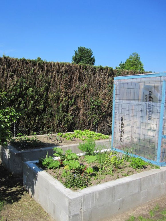Zwei unserer neuen Hochbeete mit Salat, Kohlrabi, Erdbeeren, Rhabarber und Kräutern