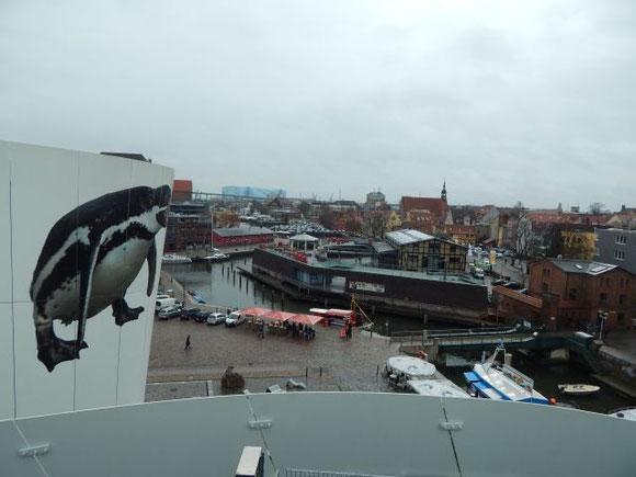 Stralsund, Ozeaneum, Pinguine