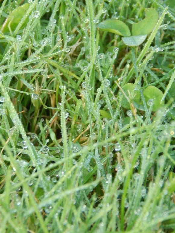 Taunasses Gras... Niedrigtemperaturrekord am Morgen lag bei 6°C!