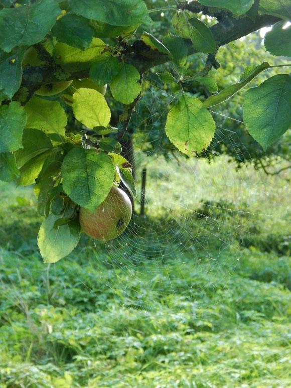 Naturnahes Leben, nachhaltig, Streuobstwiese, Familienleben auf dem Land