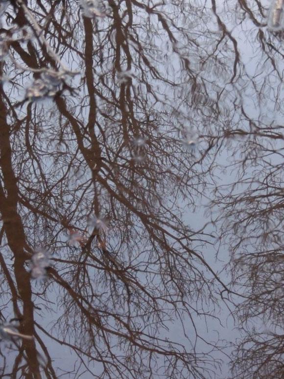 Spiegelbäume...
