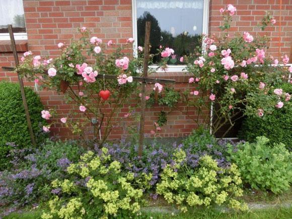 Rosenbüsche mit Frauenmantel und Katzenminze zu Füßen