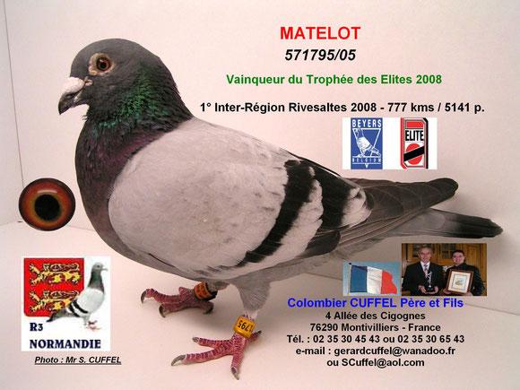 """""""MATELOT"""", demi-frère, Vainqueur du Trophée des Elites 2008"""