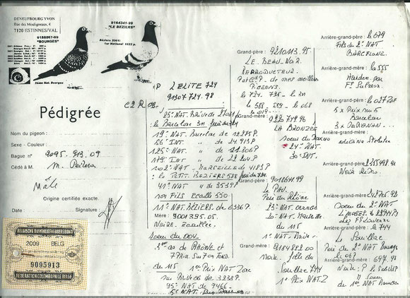 Pedigree du Père