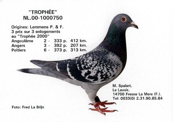 """""""TROPHEE"""" NL-00-1000750 (LEMMENS)"""