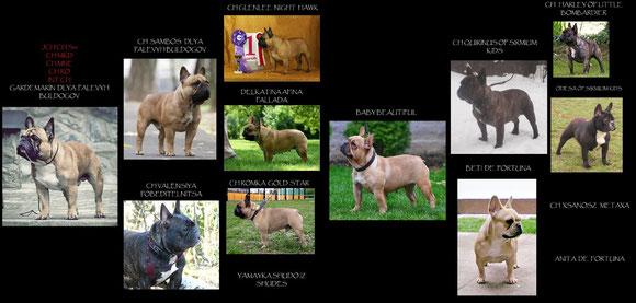 Maya pedigree