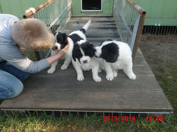 Nicolas, Katinka, Kazumi, Kolja